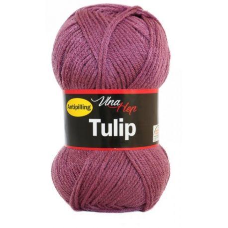 Tulip fialovo růžová